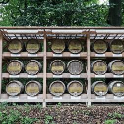 French wine barrels