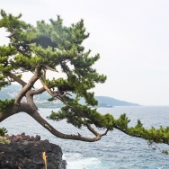 A life-sized bonsai.