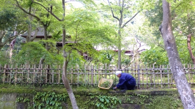 Moss Gardeners